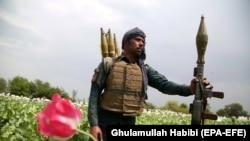 Один з афганських силовиків на маковому полі, 2019 рік