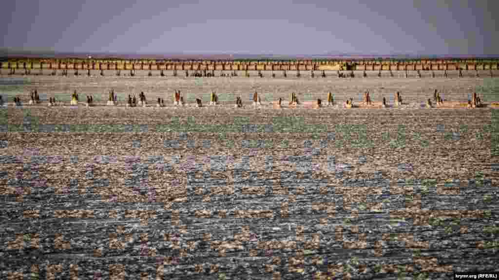 Найбільше солоне озеро в Криму – Сасик-Сиваш