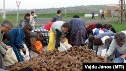Ingyenes krumpliosztás Halmajban 2005-ben