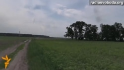 Радіо Свобода оглянуло лісосмуги Київщини
