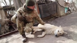 Сапер «Вовк» про мінні війни поблизу Широкино