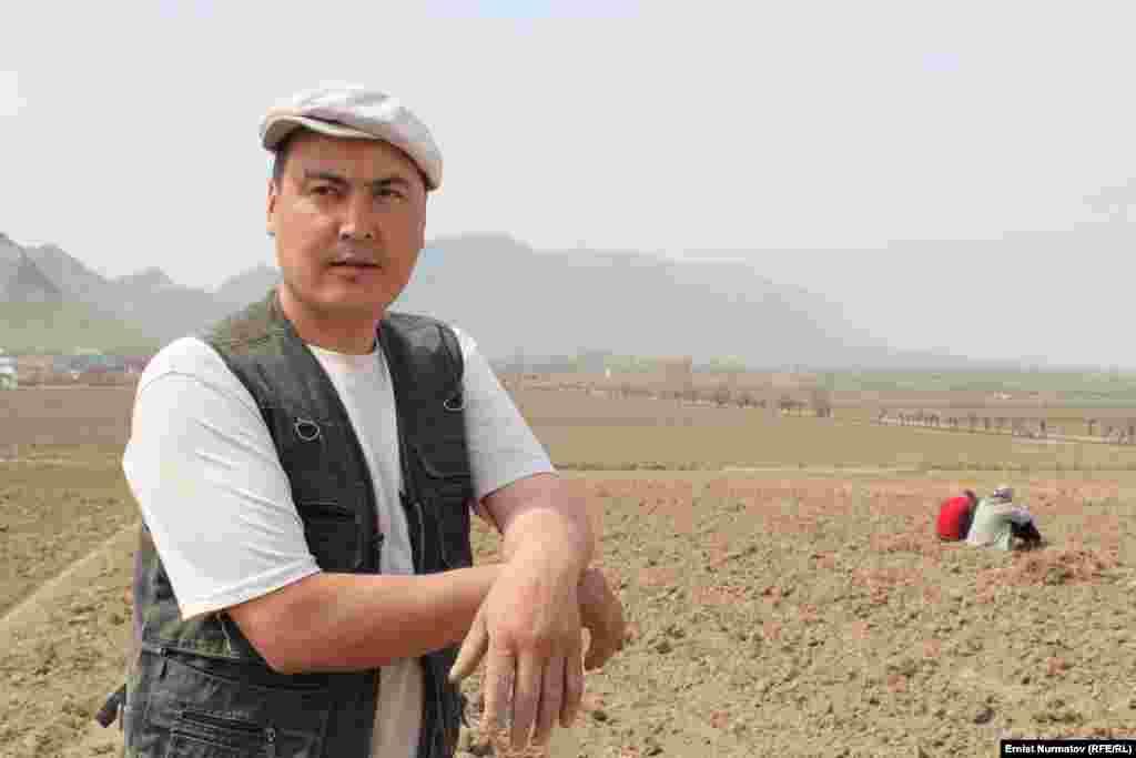 Правительством КР были распределены 40 тонн семян хлопчатника