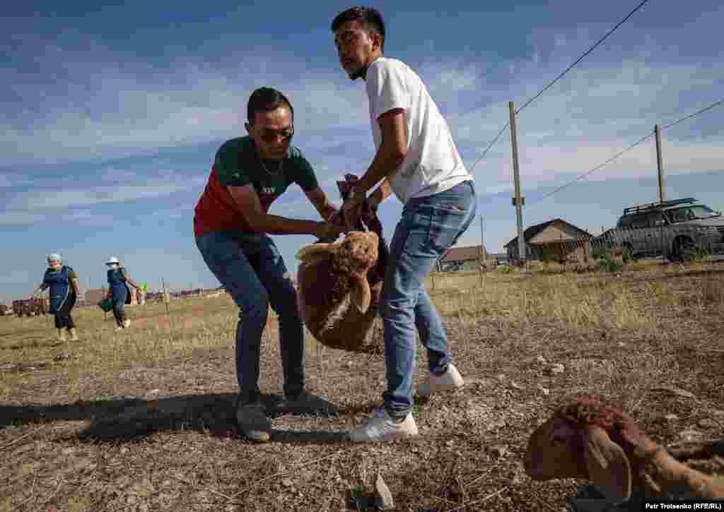 Мужчины несут барана, только что купленного на животноводческом рынке в селе Шамалган
