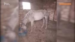 «Лошади едят землю». Сельчане просят помощи из-за засухи и падежа скота