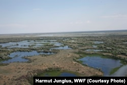 Potential tiger habitat includes flooded dunes in the tugai and reed ecosystems. (Photo: Harmut Jungius, WWF)