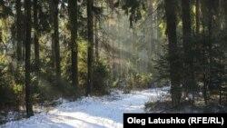 Лясны шпацыр у каляды, Менск, Беларусь - аўтар Oleg Latushko