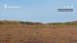 Как выживает население Ханты-Мансийского округа