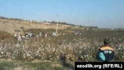 Приехавшие на уборку хлопка в Узбекистане.