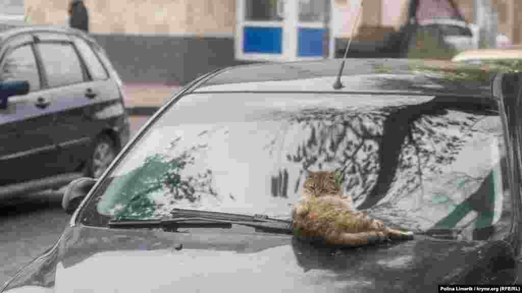 Інший моститься на теплий капот автомобіля