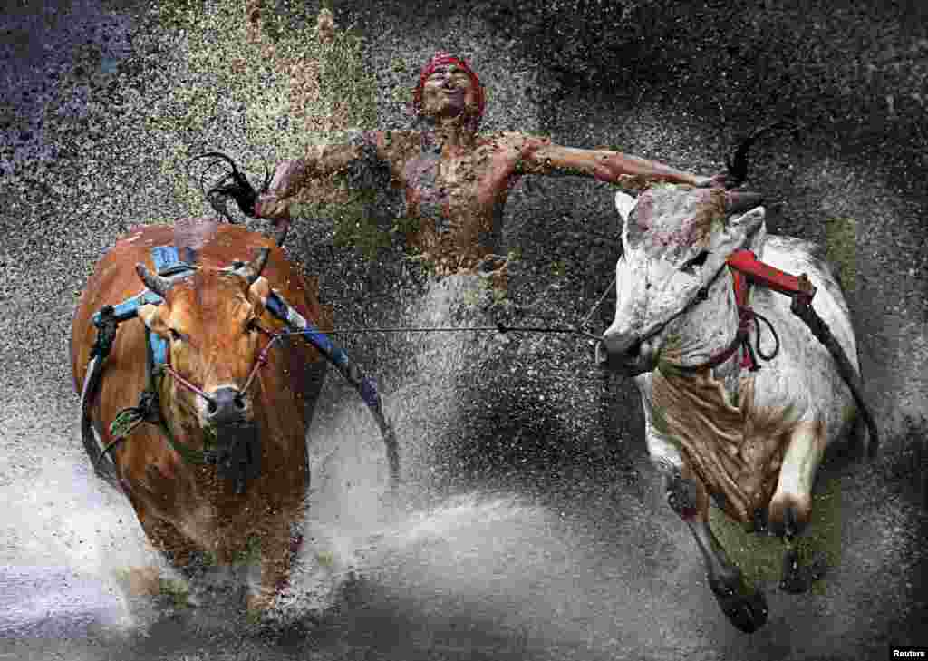 Chen Wei Seng of Malaysia won first prize in the Sports Action Single category with this picture of a jockey showing relief and joy at the end of a dangerous run across rice fields during the Pacu Jawi bull race in Batu Sangkar, West Sumatra, Indonesia.