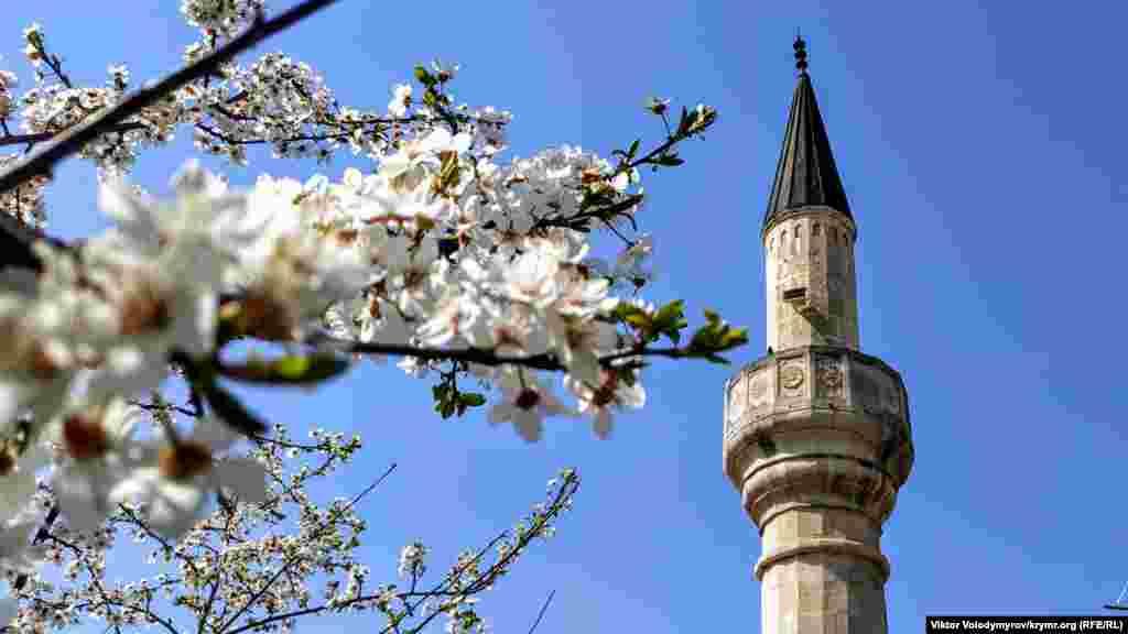 Cami minaresi manzarasında çeçek açqan terekler