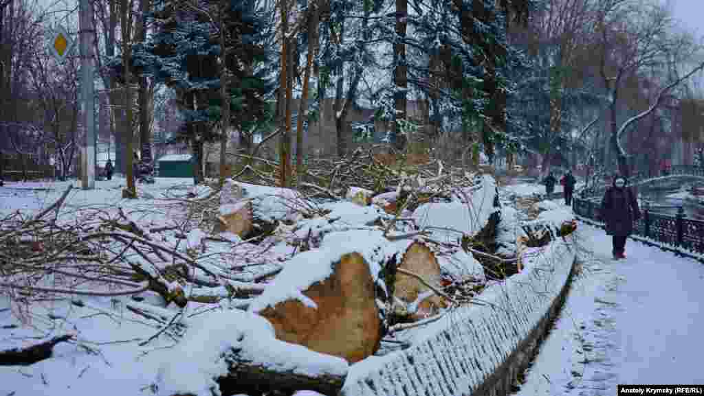 Обрезанные деревья на берегу Салгира в Симферополе