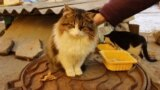 Одесский котопункт: город и доступная среда для животных