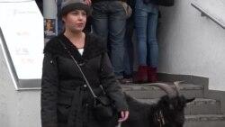 К посольству Чехии привели козла как протест против слов Земана по Крыму (видео)