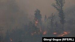 Пожежа поблизу курортного міста Боржомі, Грузія, 22 серпня 2017 року