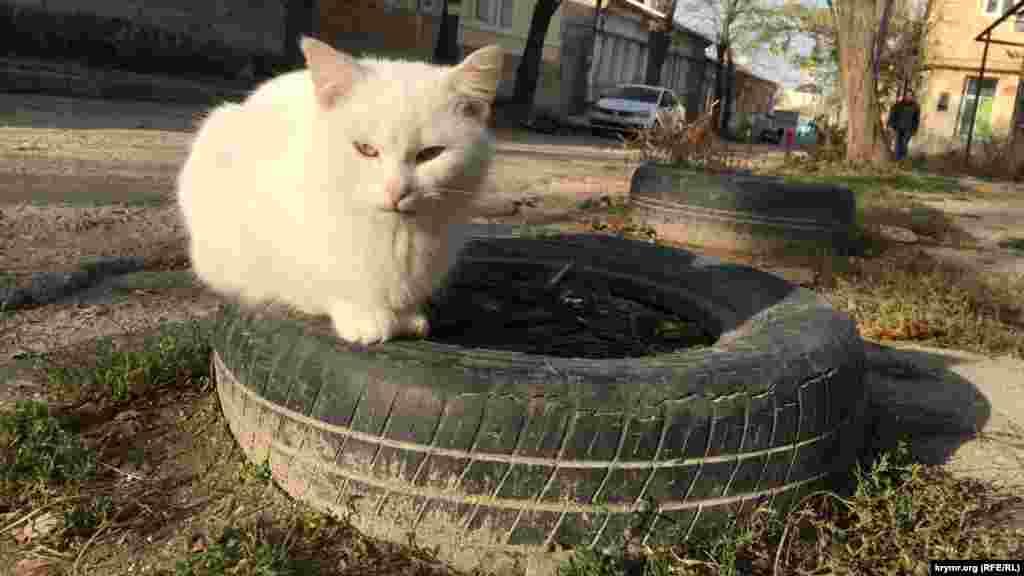Кота можно найти по адресу: старая покрышка, Старый город, Симферополь