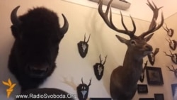 Опудала оленя, зубра та кабана знайшли євромайданівці у кабінеті Добкіна