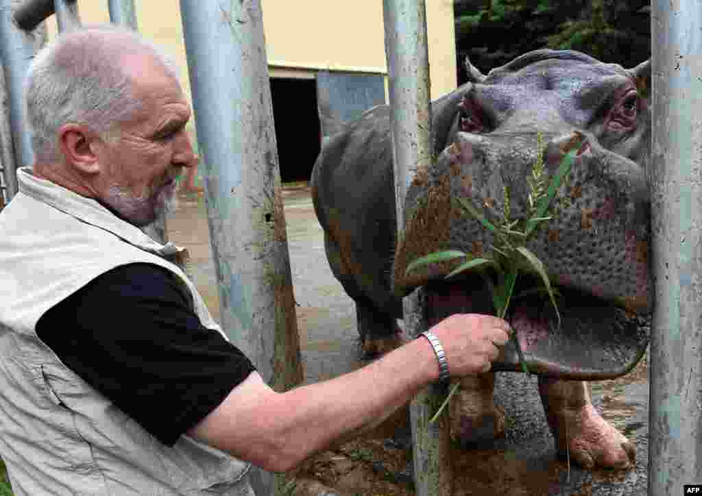 Бегемот Беги стал настоящей звездой вновь открывшегося зоопарка Тбилиси. После сильного наводненияв июне 2015 Беги долго бродил по улицам грузинской столицы, пока его не вернули обратно в вольер