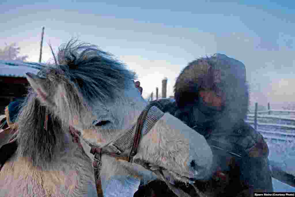 Yakut horses are raised for their meat as well as for their labor. Horse makes up at least a quarter of annual meat consumption for many residents of Yakutia.