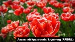На параде только тюльпаны: в Никитском ботcаду открылась выставка цветов (фотогалерея)