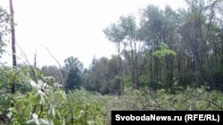 Подмосковные леса порой становятся частной собственностью...