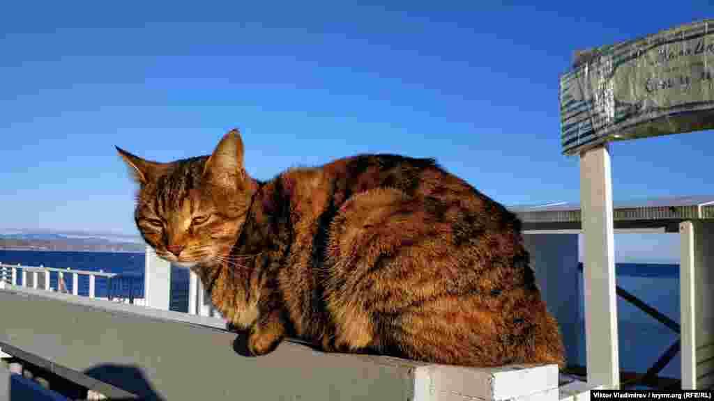Как и одинокий кот, греющийся на солнце