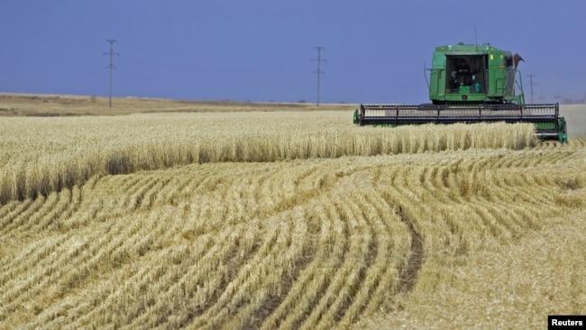 Уборка урожая пшеницы. Село Аккол Акмолинской области.