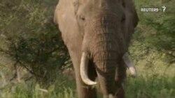 شیوه دور نگهداشتن فیلها از منازل در تانزانیا
