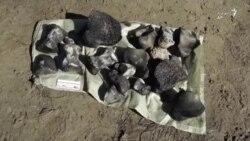کشف اسکلت یک ماموت در شمال سیبری