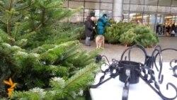 Pomul de Crăciun vine în casă