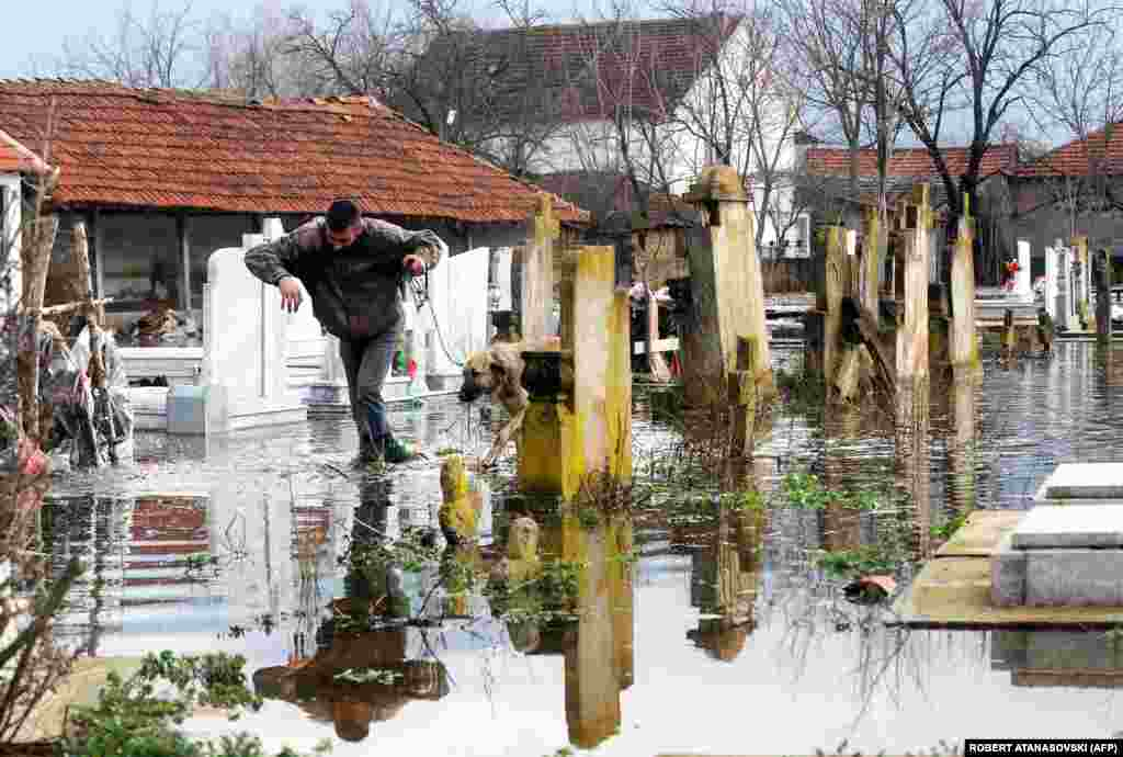 A man and a dog cross a flooded graveyard in the village of Monospitovo, in the southeastern tip of Macedonia, on February 27. Three days of torrential rains inundated fields and villages, damaging crops and homes.