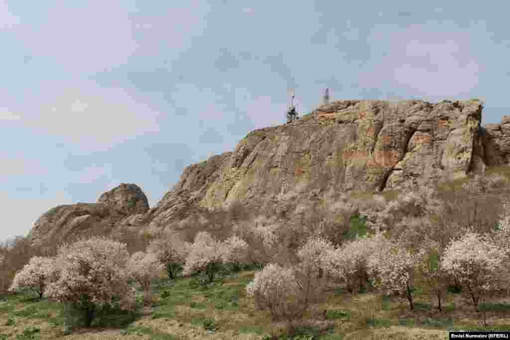 Южный склон горы утопает в цветущих деревьях и весенних цветах