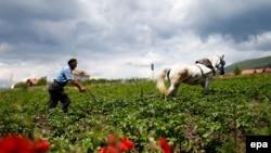 Një fermer në Kosovë...