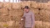 """Президент Туркменистана назвал """"Удачей"""" подаренного военными жеребенка"""