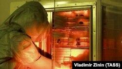 Работа лаборатории опасных вирусных инфекций НИИ Молекулярной биологии в Новосибирске