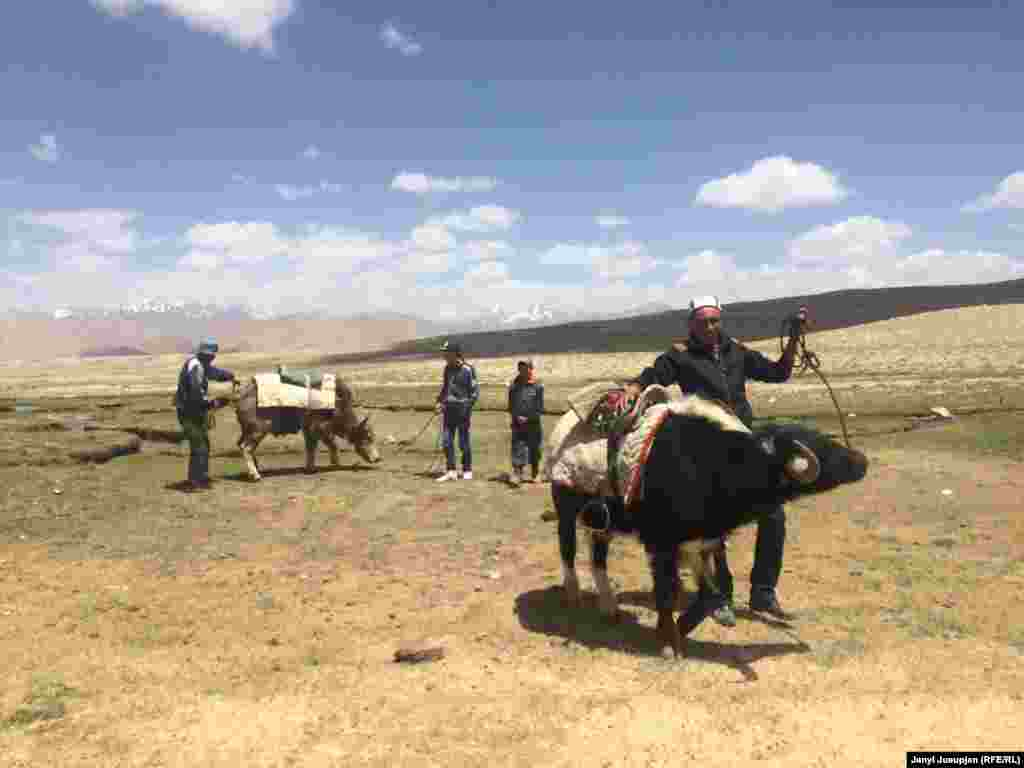Nomads prepare yaks to ride for European tourists. Tourism is important in an area with almost zero job opportunities.