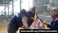 Узбекские мигранты в Казахстане режут барана на Курбан-хайит.