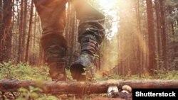 Самые опасные люди в лесу – чиновники и застройщики