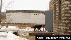 Дом пропавшего Джалгасбая Узакбаева. Город Жанаозен Мангистауской области, 18 февраля 2012 года.