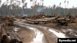 Незапаведныя краявіды Белавескайпушчы