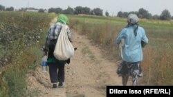 Orta Asiyada pambıq yığımı