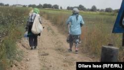 Женщины идут на поле собирать урожай хлопка. Южно-Казахстанская область, 17 сентября 2015 года.