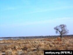 На берегу реки Сырдарьи. 19 февраля 2014 года. (Иллюстративное фото.)