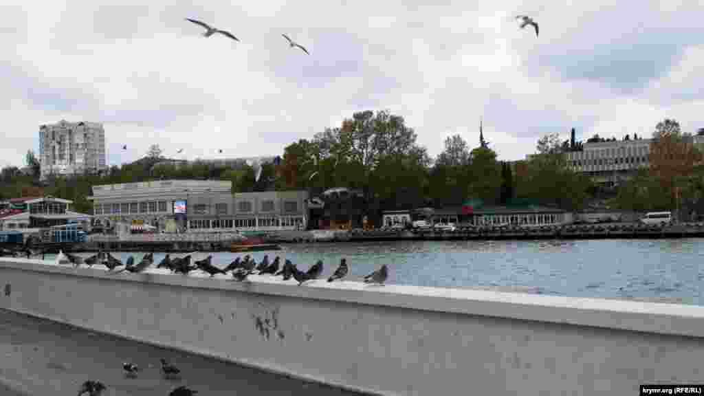 Голуби, нахохлившись, сидят на бетонном парапете.