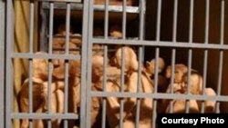 وضعیت زندانیان در سلول های شلوغ زندان اوین طی دهه شصت خورشیدی- کاری از سودابه اردوان
