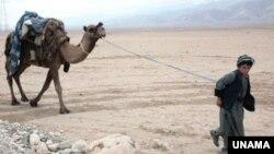 افغان کوچی ماشوم