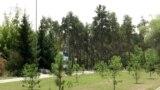 Пойдут ли деревья под топор ради конгресс-холла?