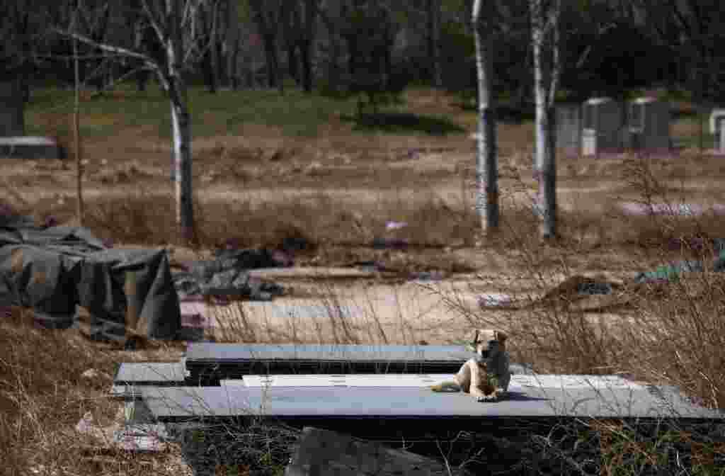 Пекин. 30.03.2012. Пустырь на месте олимпийского бейсбольного стадиона в центре китайской столицы.