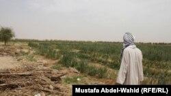 اراض زراعية ستبنى عليها مطار الفرات الاوسط
