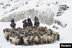 Қой айдап келе жатқан Шыңжаң қазақтары
